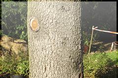 Pflegen Und Setzen Von Bäumen